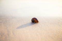 Interpréteurs de commandes interactifs sur la plage Photographie stock