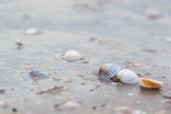 Interpréteurs de commandes interactifs sur la plage Fond Images libres de droits