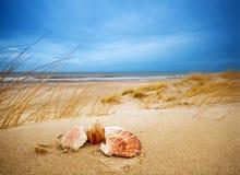 Interpréteurs de commandes interactifs sur le sable Photos stock