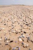 Interpréteurs de commandes interactifs sur une plage Photos stock