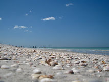 Interpréteurs de commandes interactifs sur une plage de la Floride Photos stock