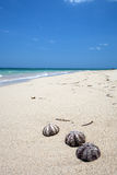 Interpréteurs de commandes interactifs sur une plage tropicale merveilleuse Images libres de droits