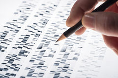 Interpreting DNA gel. Scientists examined DNA gel that is used in genetics, medicine, biology, pharma research and forensics royalty free stock image
