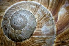Interpréteur de commandes interactif d'escargot Photo libre de droits