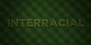 INTERRACIAL - fresh Grass letters with flowers and dandelions - 3D rendered royalty free stock image Royalty Free Stock Images