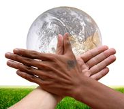 Interracial global cooperation for rice. Two racially different hands together over a globe and a rice field as a concept of global cooperation and assistance Stock Photography