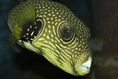 Interresting fish. Beautiful fish from egyptian aquarium Royalty Free Stock Photo