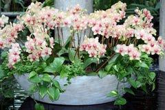 Interruptor de las orquídeas Fotografía de archivo libre de regalías