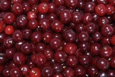 Interruttore sano fresco di estate della ciliegia del macro macro del primo piano delle more di dieta della fragola di frutti mir Immagine Stock