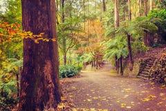 Intersección del sendero en un bosque tropical en caída Imágenes de archivo libres de regalías