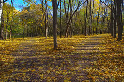 Intersecting paths in autumn park. Royalty Free Stock Photography