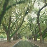 Intersecting Tree Path. Beautiful exit out of a South Carolina neighborhood Royalty Free Stock Photo