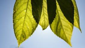 Intersection des feuilles photographie stock libre de droits