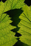 Intersection of green leaves. Royalty Free Stock Photos