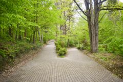 Intersection of two alleys in the park among trees and shrubs. The big alley has splitted in two smaller paths. One alley goes up royalty free stock photography
