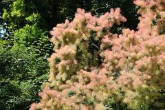 Interseting brązu drzewo Zdjęcie Royalty Free