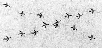 Intersezione delle strade dell'uccello Fotografia Stock