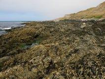 intertidal Стоковые Изображения RF