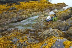 Intertidal zones exposed Stock Photography