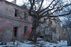 Intertwined old trees on the background of an abandoned dilapidated old mansion Royalty Free Stock Photo