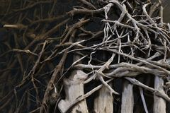 Intertwined tree roots in water Royalty Free Stock Images