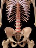 The intervertebral discs Royalty Free Stock Photo