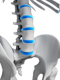 Intervertebral disks Stock Photography
