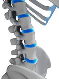 Intervertebral disks Stock Photo