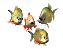 Interview concept, goldfish and piranhas. 3d with work path Stock Photography