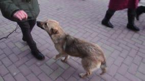 Intervista della presa della ragazza dal cane randagio alla scaletta della via archivi video