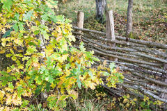 Interwoven wooden fence. Old wooden fence with interwoven branches and autumn colors Stock Image