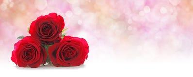 Intestazione del sito Web di tre bella rose rosse Fotografia Stock Libera da Diritti