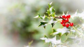 Intestazione rossa della cima del ot del email della bacca del cardo selvatico realistico di Buon Natale Fotografia Stock