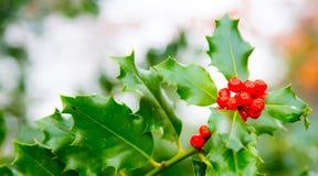 Intestazione rossa della cima del ot del email della bacca del cardo selvatico realistico di Buon Natale Immagini Stock