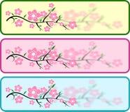 Intestazioni del fiore di ciliegia Fotografia Stock