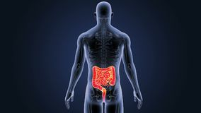 Intestin avec le corps squelettique illustration stock