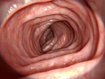 Intestin sain illustration de vecteur