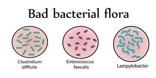 Intestinal bacterial flora. Bad bacteria. Vector illustration stock illustration