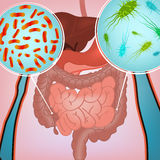Intestinal infection image. Beautiful vector illustration of bacterial flora in human internal organs. Abstract medicine concept. Useful for poster, indographics Royalty Free Stock Images
