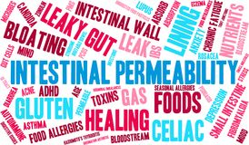 Intestinal Permeability Word Cloud. On a white background stock illustration