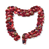 Intestine. Creative icon in mixed berries background stock photography