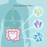 Intestino con la buona flora dei batteri royalty illustrazione gratis