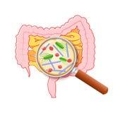 Intestino tenue, due punti e lente d'ingrandimento umani Primo piano di cattivi cattivi batteri illustrazione vettoriale