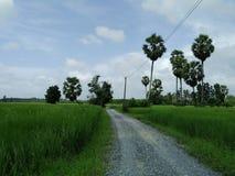 InThailand do arroz do campo Imagens de Stock