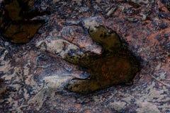 InThailand real de la huella del dinosaurio Fotografía de archivo libre de regalías