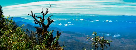 Inthanon bosvooruitzicht Thailand stock fotografie