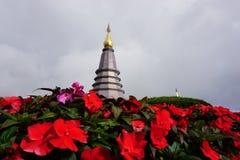 Inthanon Doi с красивым цветком стоковое фото