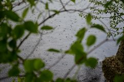 Intimate glance. Light rainfall om the lake Royalty Free Stock Images
