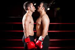 Intimidation before a fight Stock Photos