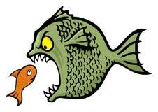 Intimideer vissen Stock Foto's